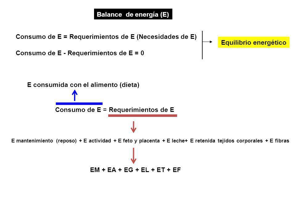 Consumo de E = Requerimientos de E Balance de energía (E) Consumo de E - Requerimientos de E = 0 E mantenimiento (reposo) + E actividad + E feto y placenta + E leche+ E retenida tejidos corporales + E fibras Consumo de E = Requerimientos de E (Necesidades de E) Equilibrio energético E consumida con el alimento (dieta) EM + EA + EG + EL + ET + EF
