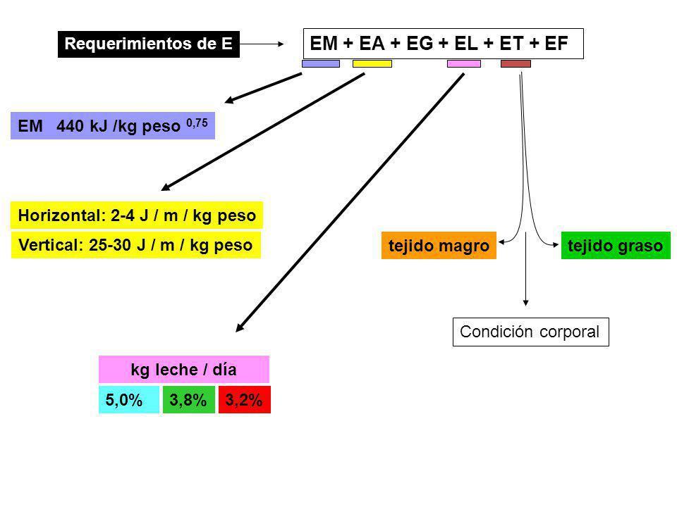 EM + EA + EG + EL + ET + EF Requerimientos de E 440 kJ /kg peso 0,75 EM Horizontal: 2-4 J / m / kg peso Vertical: 25-30 J / m / kg peso 5,0%3,8%3,2% kg leche / día tejido magrotejido graso Condición corporal