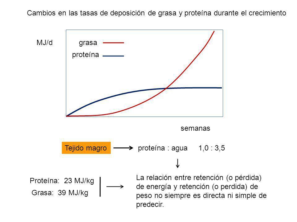 MJ/d semanas grasa proteína Cambios en las tasas de deposición de grasa y proteína durante el crecimiento proteína : agua 1,0 : 3,5Tejido magro Proteína: 23 MJ/kg Grasa: 39 MJ/kg La relación entre retención (o pérdida) de energía y retención (o perdida) de peso no siempre es directa ni simple de predecir.