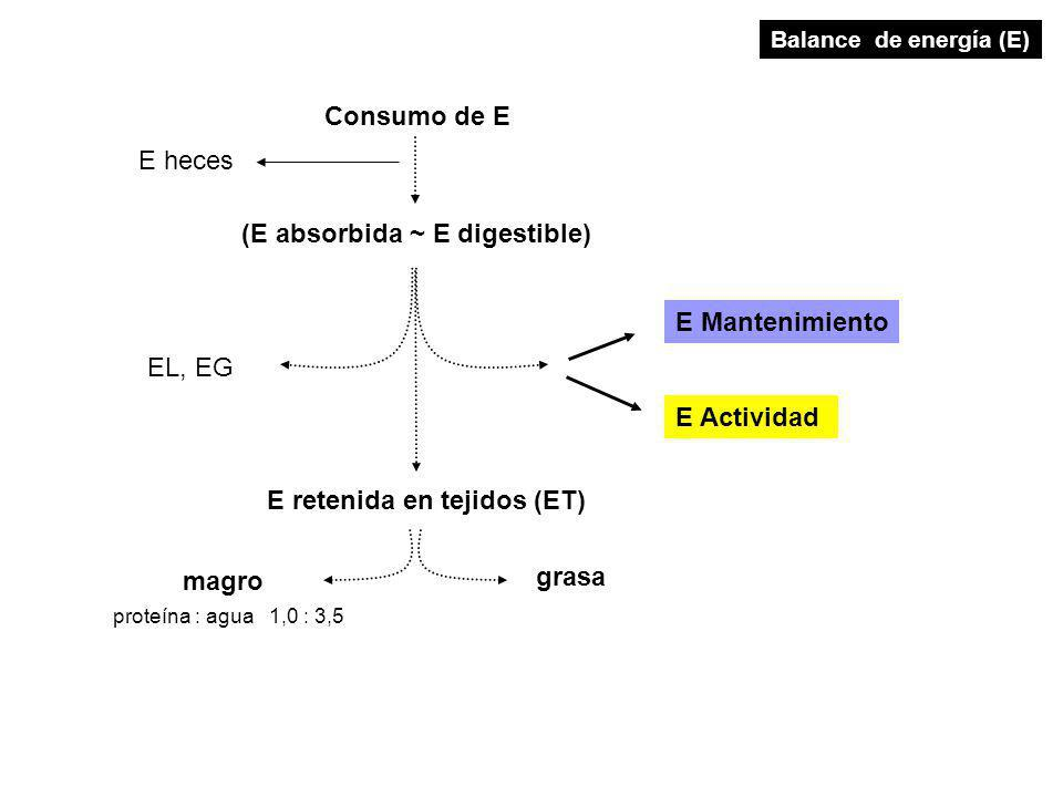 Consumo de E E retenida en tejidos (ET) magro grasa proteína : agua 1,0 : 3,5 E Mantenimiento E Actividad (E absorbida ~ E digestible) E heces Balance de energía (E) EL, EG