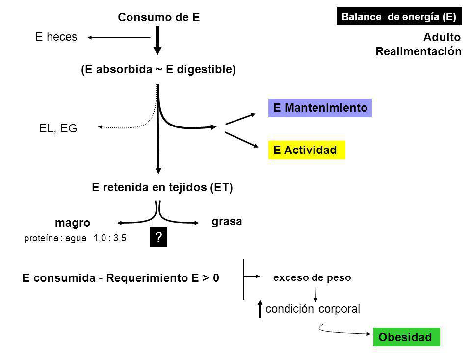 Consumo de E E retenida en tejidos (ET) magro grasa proteína : agua 1,0 : 3,5 E Mantenimiento E Actividad (E absorbida ~ E digestible) E heces Balance de energía (E) EL, EG Adulto E consumida - Requerimiento E > 0 exceso de peso Obesidad condición corporal .