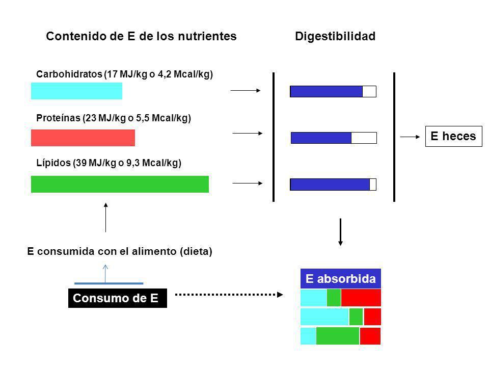 Consumo de E E consumida con el alimento (dieta) Carbohidratos (17 MJ/kg o 4,2 Mcal/kg) Proteínas (23 MJ/kg o 5,5 Mcal/kg) Lípidos (39 MJ/kg o 9,3 Mca