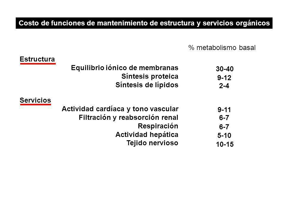 Costo de funciones de mantenimiento de estructura y servicios orgánicos Estructura Equilibrio iónico de membranas Síntesis proteica Síntesis de lípidos Servicios Actividad cardíaca y tono vascular Filtración y reabsorción renal Respiración Actividad hepática Tejido nervioso 30-40 9-12 2-4 9-11 6-7 5-10 10-15 % metabolismo basal