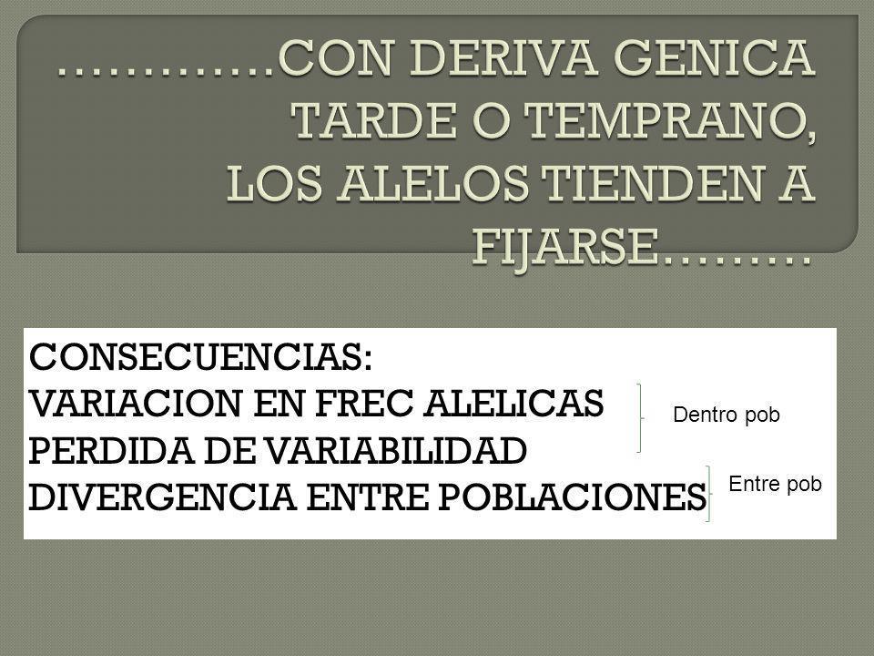 CONSECUENCIAS: VARIACION EN FREC ALELICAS PERDIDA DE VARIABILIDAD DIVERGENCIA ENTRE POBLACIONES Dentro pob Entre pob