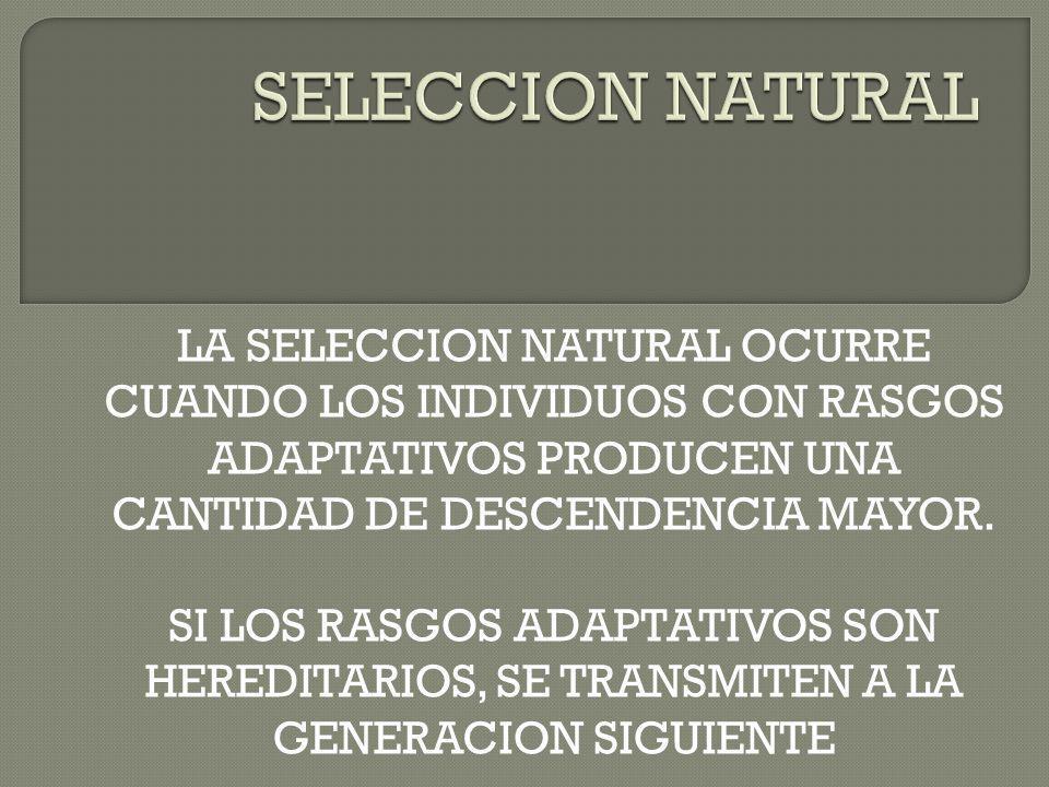 LA SELECCION NATURAL OCURRE CUANDO LOS INDIVIDUOS CON RASGOS ADAPTATIVOS PRODUCEN UNA CANTIDAD DE DESCENDENCIA MAYOR. SI LOS RASGOS ADAPTATIVOS SON HE