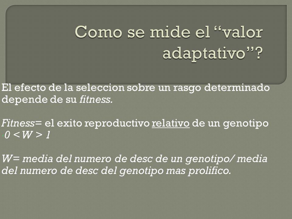 El efecto de la seleccion sobre un rasgo determinado depende de su fitness. Fitness= el exito reproductivo relativo de un genotipo 0 1 W= media del nu