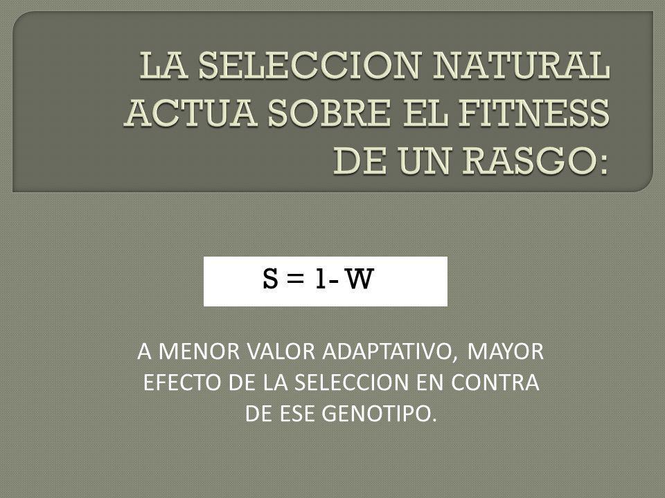 S = 1- W A MENOR VALOR ADAPTATIVO, MAYOR EFECTO DE LA SELECCION EN CONTRA DE ESE GENOTIPO.