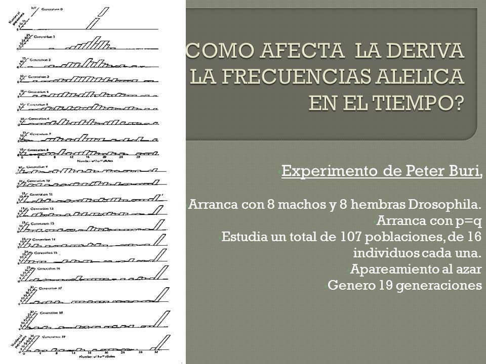 CONCLUSION; Como resultado de la deriva genica, las frecuencias alelicas en poblaciones diferentes divergieron y a menudo se tornaron FIJAS para un alelo o para el otro.