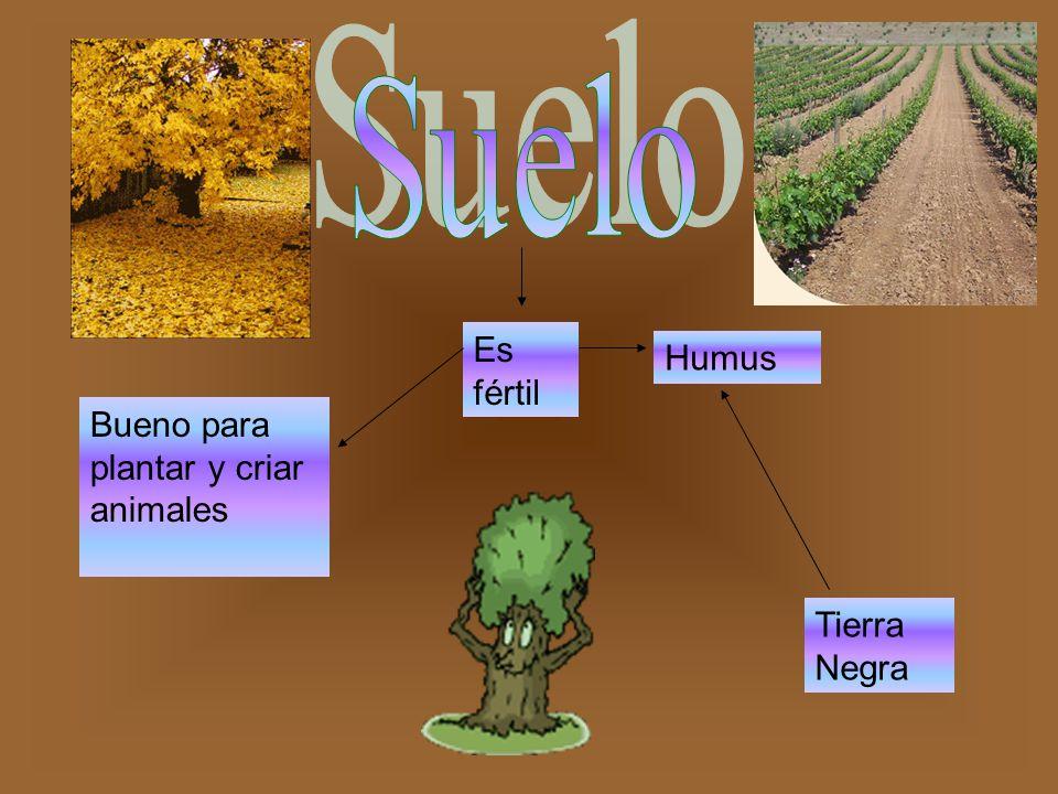 Es fértil Humus Tierra Negra Bueno para plantar y criar animales