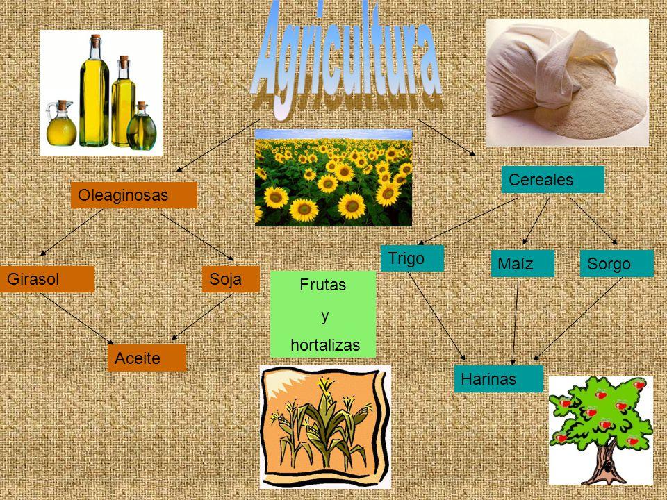 Oleaginosas SojaGirasol Aceite Cereales Trigo MaízSorgo Harinas Frutas y hortalizas
