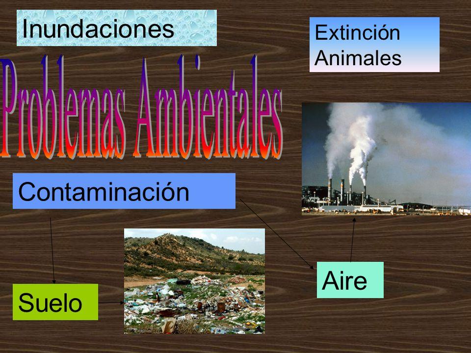 Contaminación Aire Suelo Inundaciones Extinción Animales