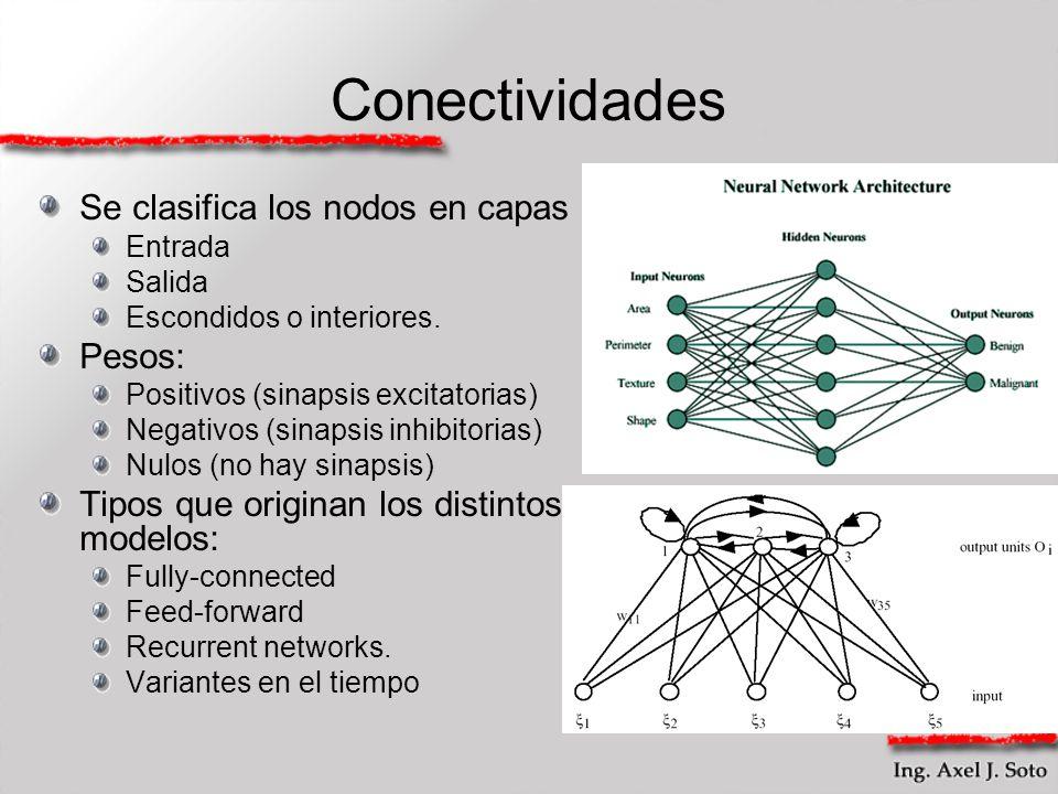 Conectividades Se clasifica los nodos en capas Entrada Salida Escondidos o interiores. Pesos: Positivos (sinapsis excitatorias) Negativos (sinapsis in