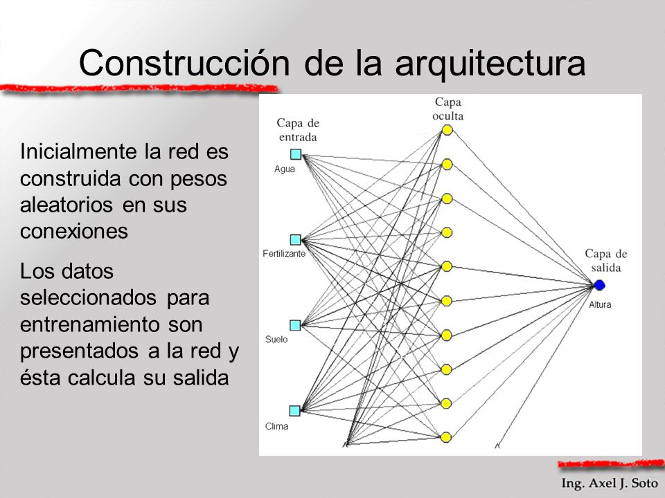 Construcción de la arquitectura Inicialmente la red es construida con pesos aleatorios en sus conexiones Los datos seleccionados para entrenamiento so