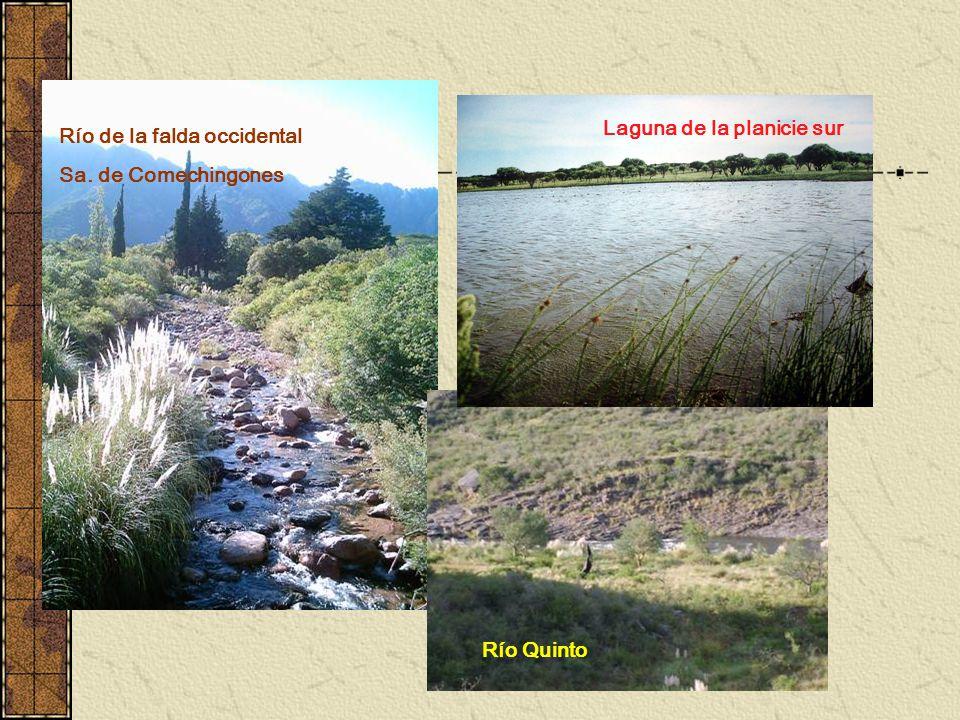 Río Quinto Río de la falda occidental Sa. de Comechingones Laguna de la planicie sur