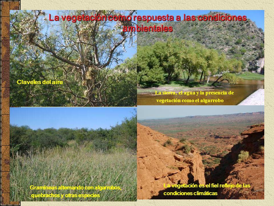 La vegetación como respuesta a las condiciones ambientales Claveles del aire La sierra, el agua y la presencia de vegetación como el algarrobo Gramíne