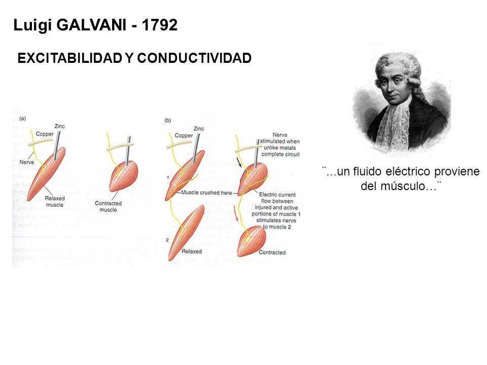 Luigi GALVANI - 1792 ¨...un fluido eléctrico proviene del músculo…¨ EXCITABILIDAD Y CONDUCTIVIDAD