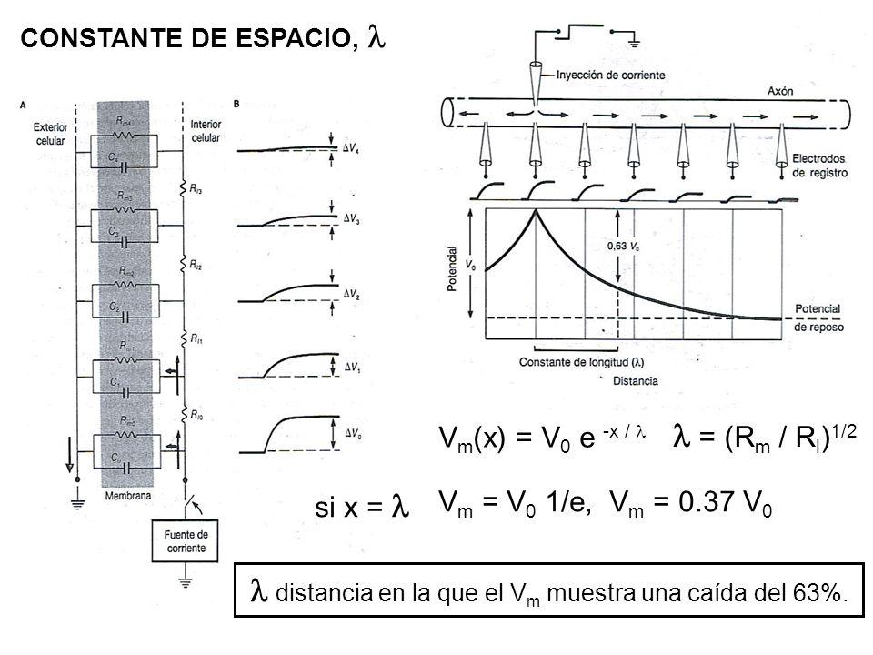 CONSTANTE DE ESPACIO, V m (x) = V 0 e -x / = (R m / R l ) 1/2 si x = V m = V 0 1/e, V m = 0.37 V 0 distancia en la que el V m muestra una caída del 63