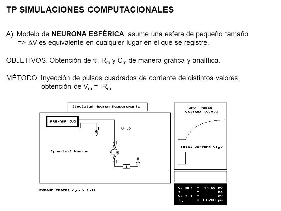 TP SIMULACIONES COMPUTACIONALES A)Modelo de NEURONA ESFÉRICA: asume una esfera de pequeño tamaño => V es equivalente en cualquier lugar en el que se r
