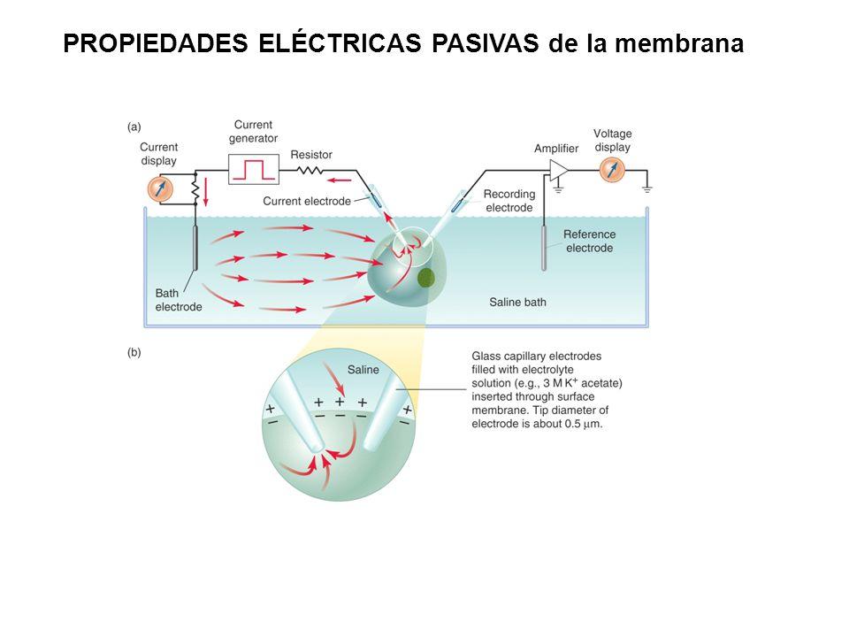 PROPIEDADES ELÉCTRICAS PASIVAS de la membrana