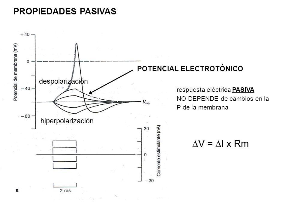 respuesta eléctrica PASIVA NO DEPENDE de cambios en la P de la membrana POTENCIAL ELECTROTÓNICO V = I x Rm PROPIEDADES PASIVAS despolarización hiperpo