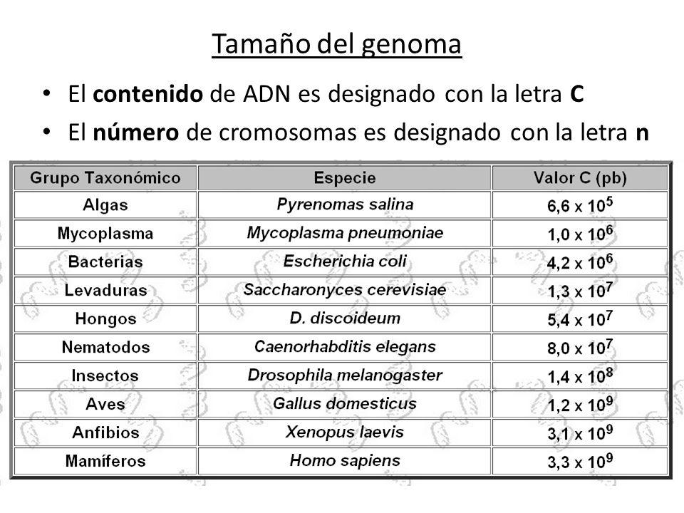 Tamaño del genoma El contenido de ADN es designado con la letra C El número de cromosomas es designado con la letra n