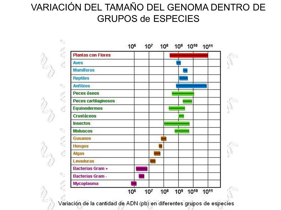 VARIACIÓN DEL TAMAÑO DEL GENOMA DENTRO DE GRUPOS de ESPECIES