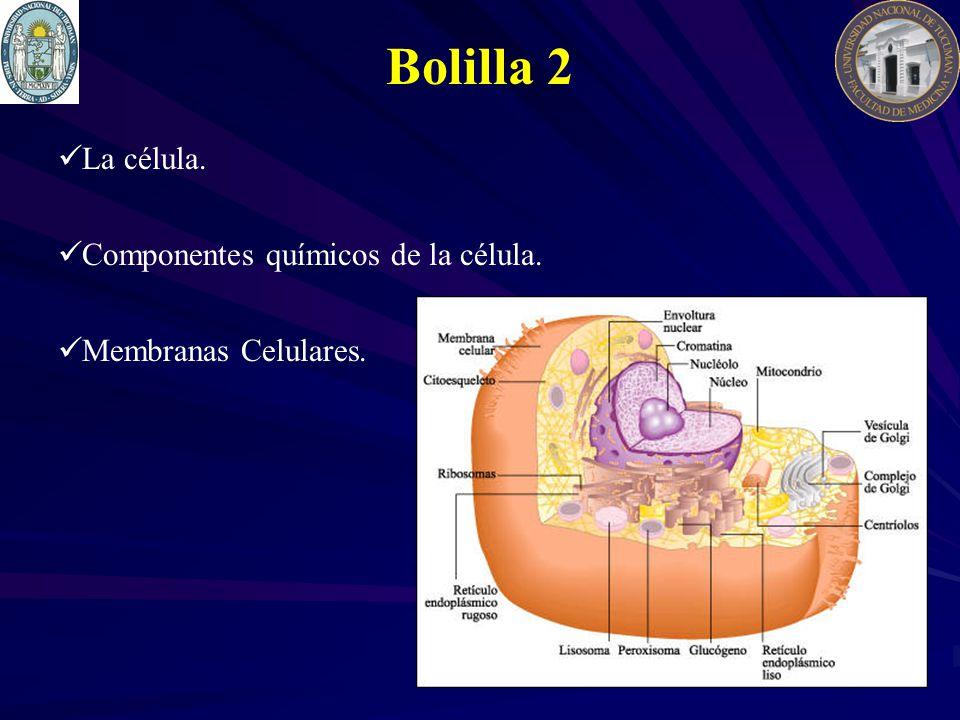 Bolilla 2 La célula. Componentes químicos de la célula. Membranas Celulares.