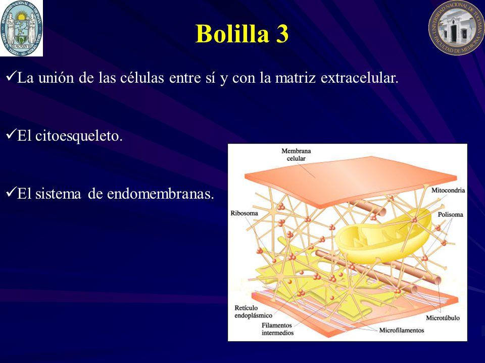 Bolilla 3 La unión de las células entre sí y con la matriz extracelular.