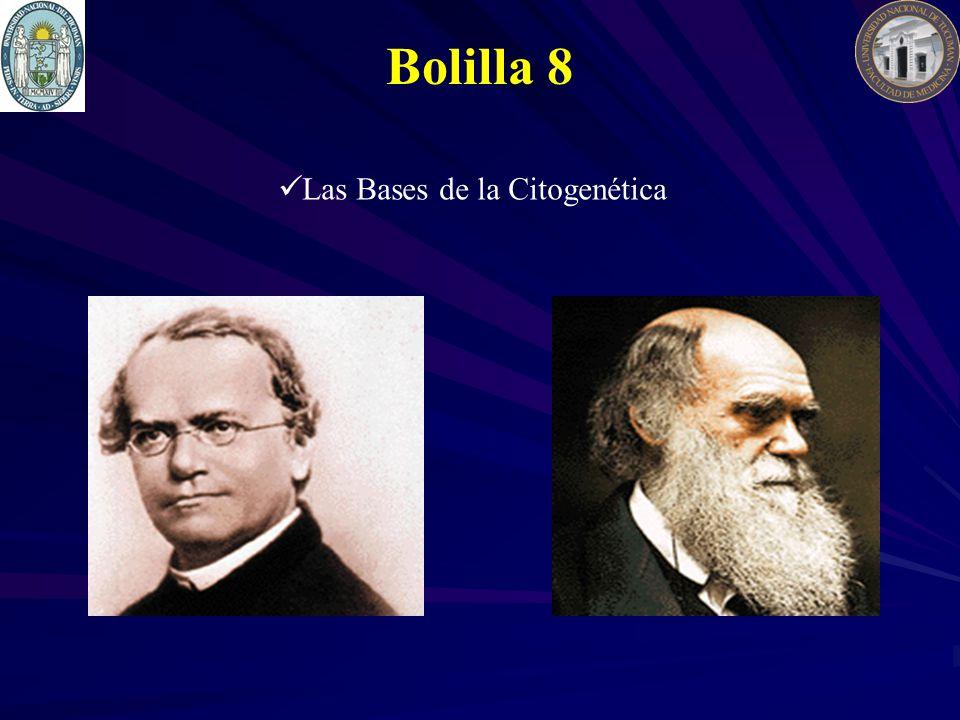 Bolilla 8 Las Bases de la Citogenética
