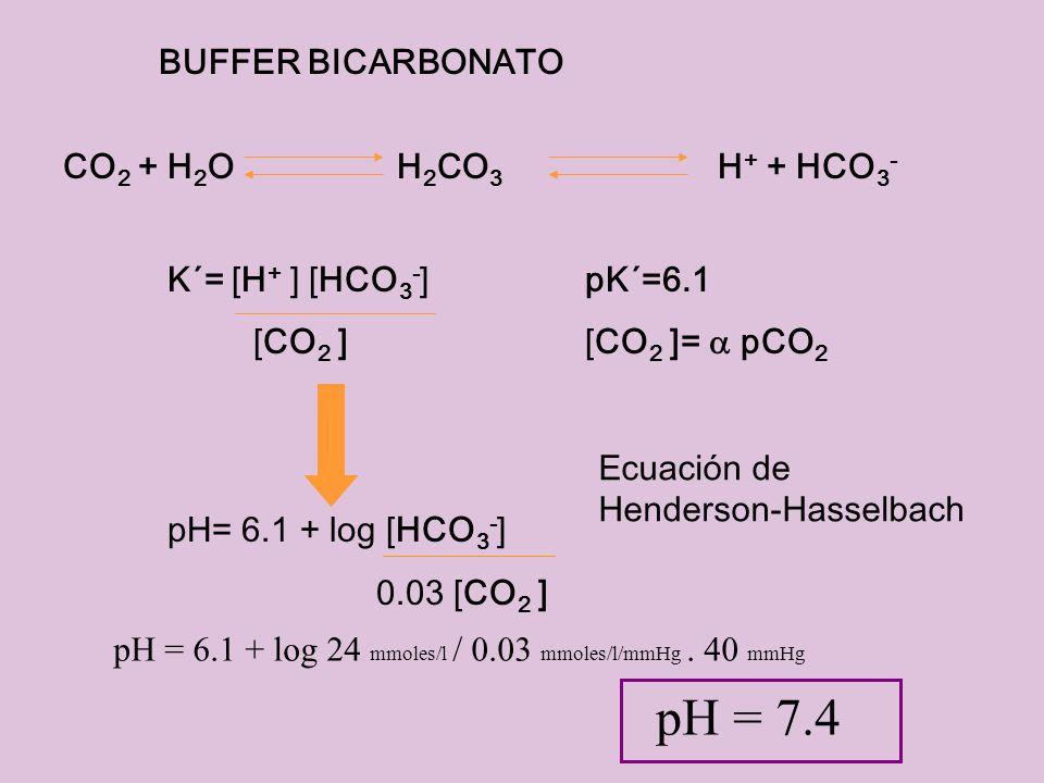 BUFFER BICARBONATO CO 2 + H 2 O H 2 CO 3 H + + HCO 3 - K´= [H + ] [HCO 3 - ]pK´=6.1 [CO 2 ][CO 2 ]= pCO 2 pH= 6.1 + log [HCO 3 - ] 0.03 [CO 2 ] Ecuaci