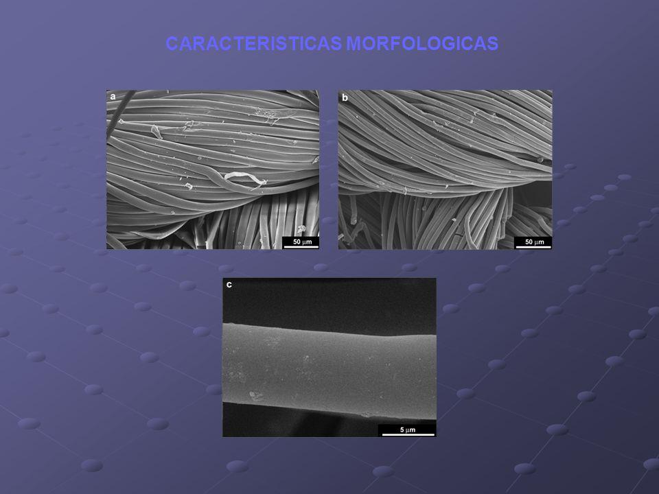 CARACTERISTICAS MORFOLOGICAS