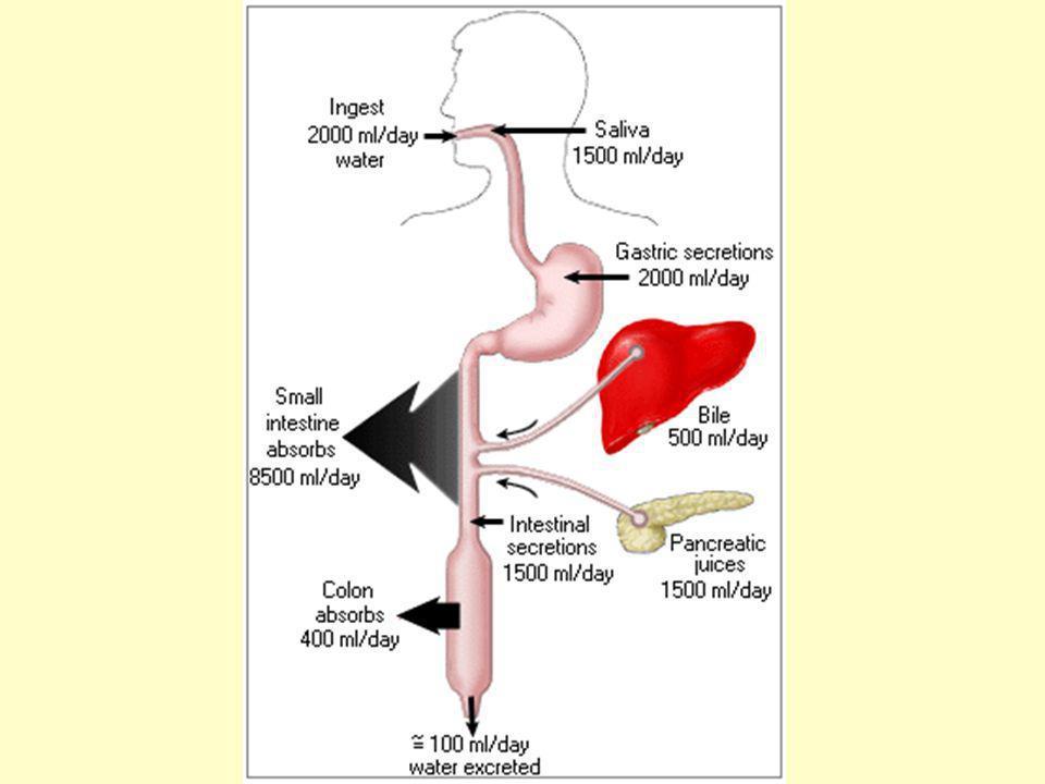 Secreciones del tubo digestivo Tipo o lugar ml/día pH Saliva 1000 6.0-7.0 Jugo gástrico 1500 1.0-3.5 Jugo pancreático 1000 8.0-8.3 Bilis 1000 7.8 Intestino delgado 1800 7.5-8.0 Duodeno 200 8.0-8.9 Colon 200 7.5-8.0