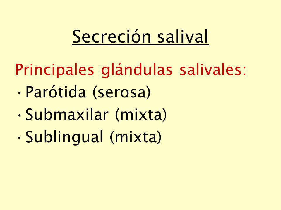Regulación de la secreción En las céls.de los acinos: Ach, sustancia P y NA ( ): sec.