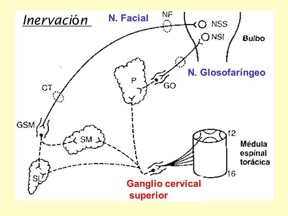 Secreción salival 1.Función de la saliva 2.Composición 3.Propiedades 4.Mecanismo de formación