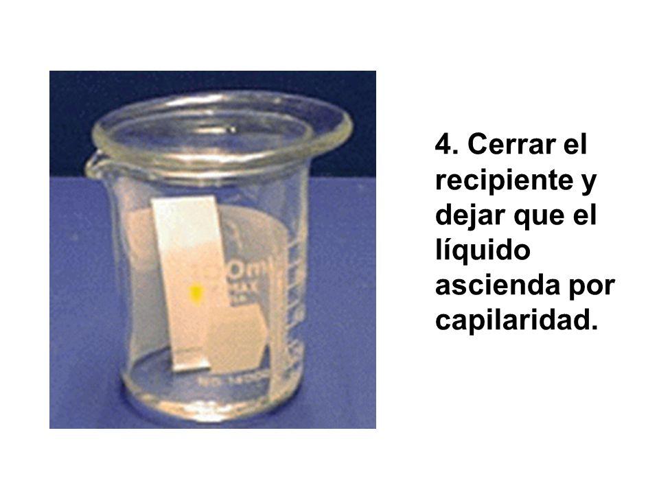 4. Cerrar el recipiente y dejar que el líquido ascienda por capilaridad.