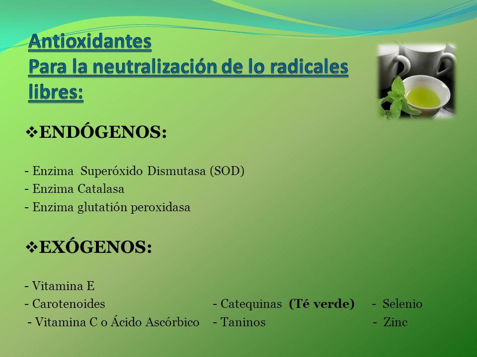 ENDÓGENOS: - Enzima Superóxido Dismutasa (SOD) - Enzima Catalasa - Enzima glutatión peroxidasa EXÓGENOS: - Vitamina E - Carotenoides - Catequinas (Té