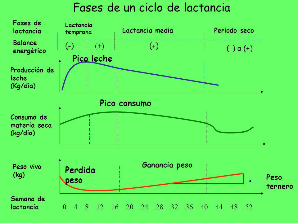 Fases de un ciclo de lactancia 0 4 8 12 16 20 24 28 32 36 40 44 48 52 Lactancia temprana Lactancia mediaPeriodo seco Semana de lactancia Producción de