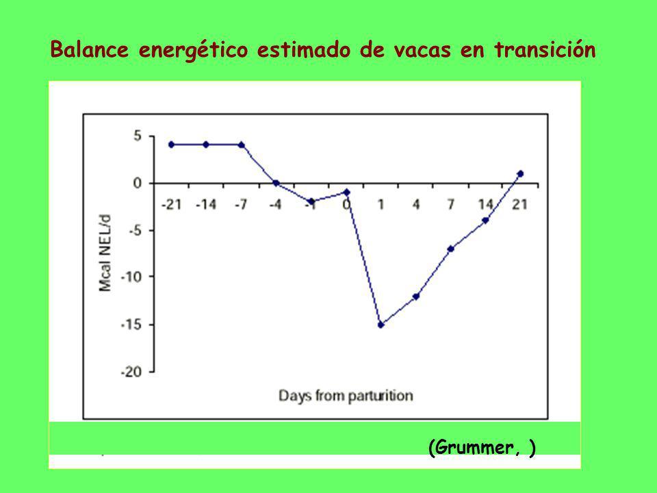 Balance energético estimado de vacas en transición (Grummer, )