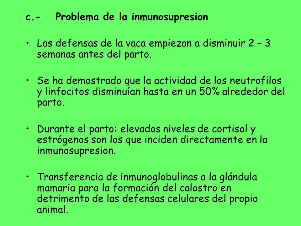 c.-Problema de la inmunosupresion Las defensas de la vaca empiezan a disminuir 2 – 3 semanas antes del parto. Se ha demostrado que la actividad de los