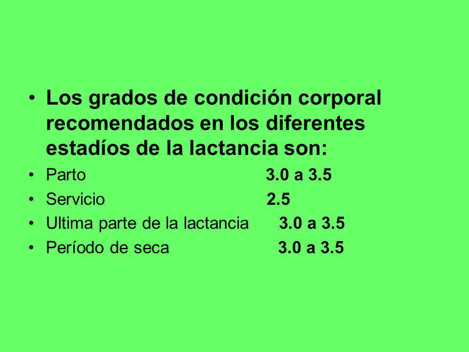 Los grados de condición corporal recomendados en los diferentes estadíos de la lactancia son: Parto 3.0 a 3.5 Servicio 2.5 Ultima parte de la lactanci