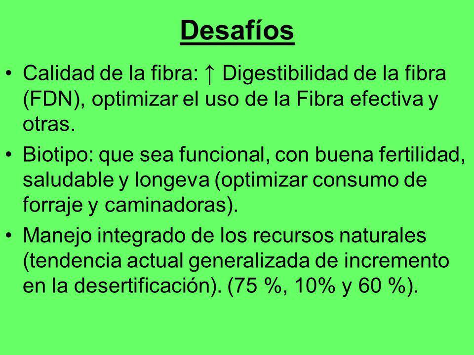 Desafíos Calidad de la fibra: Digestibilidad de la fibra (FDN), optimizar el uso de la Fibra efectiva y otras. Biotipo: que sea funcional, con buena f