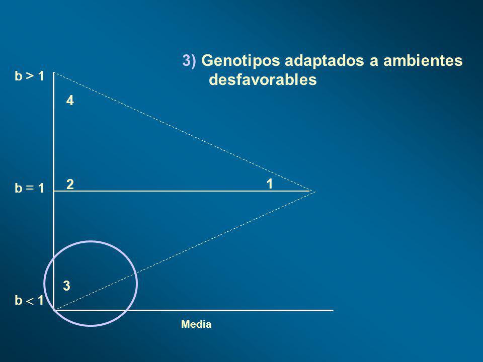 Media b > 1 b 1 b = 1 1 2 4 3 3) Genotipos adaptados a ambientes desfavorables