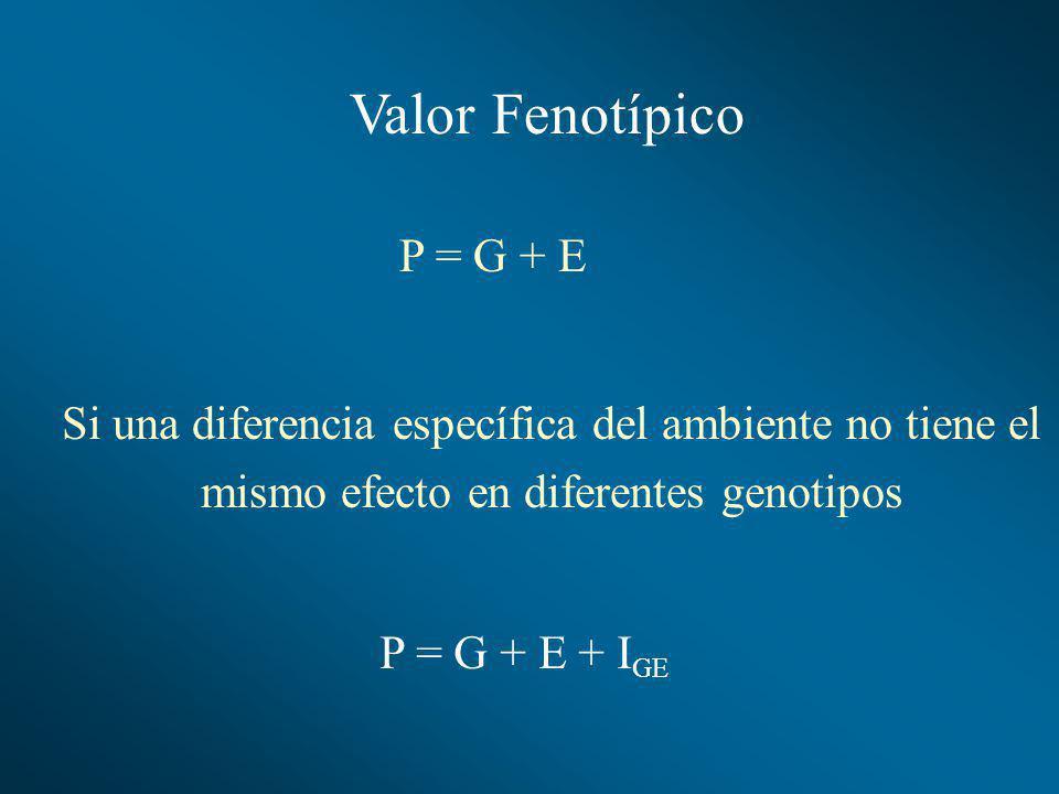 Valor Fenotípico P = G + E P = G + E + I GE Si una diferencia específica del ambiente no tiene el mismo efecto en diferentes genotipos