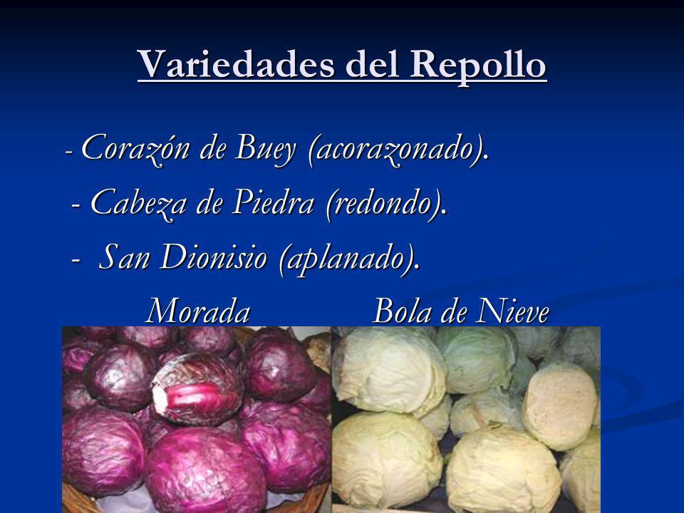 Variedades del Repollo - Corazón de Buey (acorazonado).