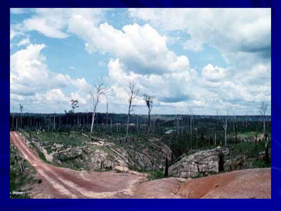 1- INTRODUCCIÓN: Deforestación, destrucción a gran escala del bosque por la acción humana, generalmente para la utilización de la tierra para otros us