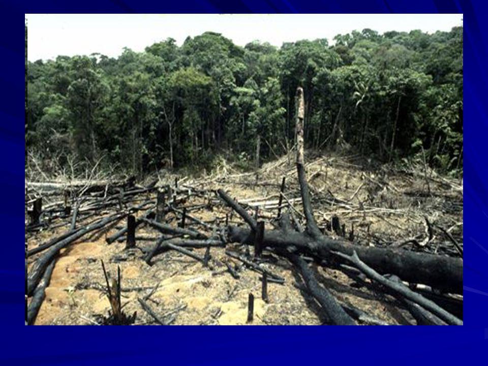 Si hoy la deforestación se considera un problema, antiguamente se pensaba que contribuía al desarrollo nacional.