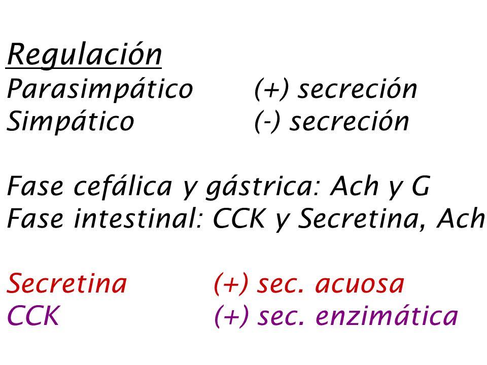Regulación Parasimpático (+) secreción Simpático (-) secreción Fase cefálica y gástrica: Ach y G Fase intestinal: CCK y Secretina, Ach Secretina (+) sec.