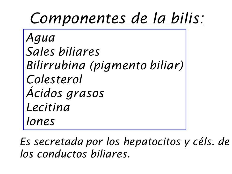 Componentes de la bilis: Agua Sales biliares Bilirrubina (pigmento biliar) Colesterol Ácidos grasos Lecitina Iones Es secretada por los hepatocitos y