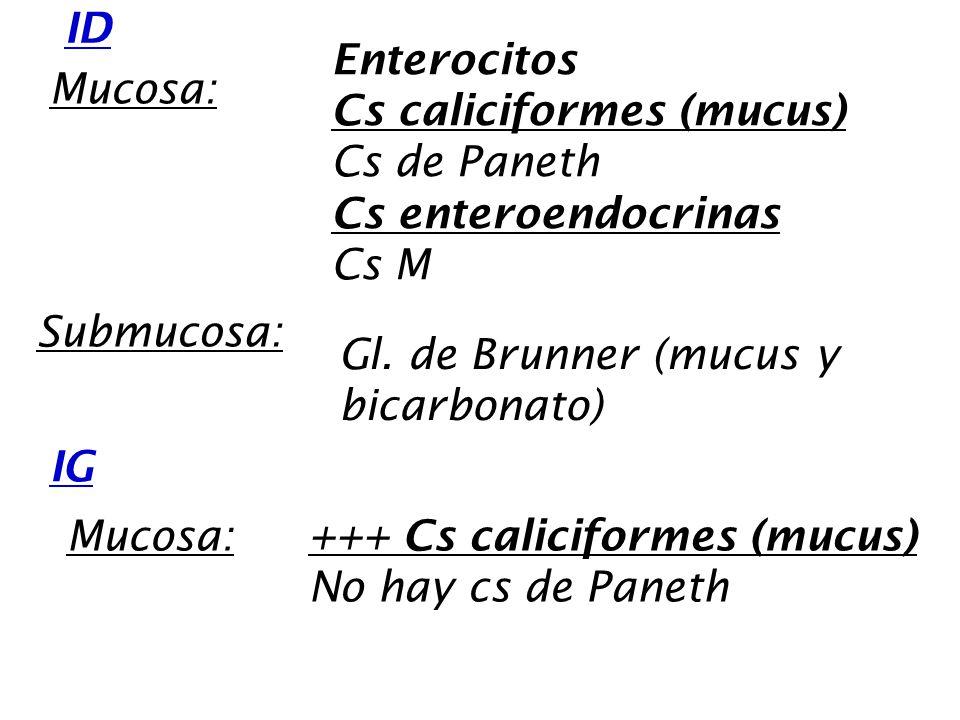 ID IG Mucosa: Enterocitos Cs caliciformes (mucus) Cs de Paneth Cs enteroendocrinas Cs M Submucosa: Gl. de Brunner (mucus y bicarbonato) Mucosa:+++ Cs