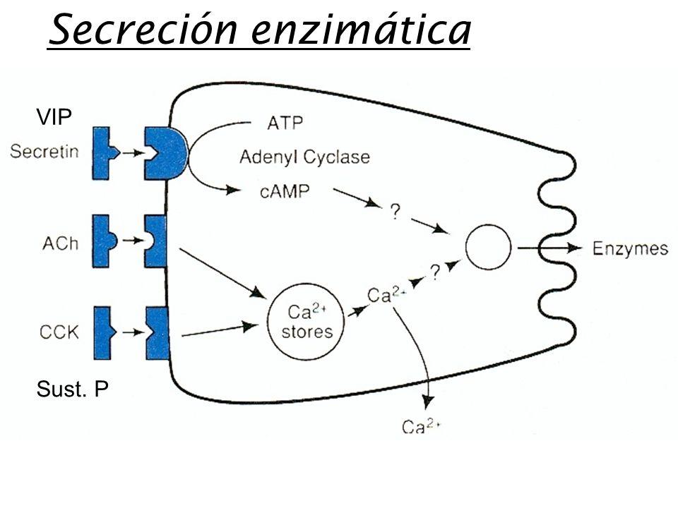 VIP Sust. P Secreción enzimática